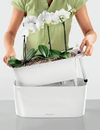conseils et astuces pour des orchidées splendides