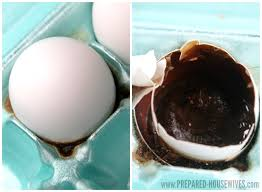 preserving eggs with mineral oil one year later prepared