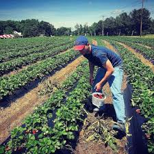 Pumpkin Patch Farms Raleigh Nc by Pick Your Own Fruits And Veggies At Page Farms Raleigh Offline