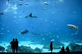 aquarium geant a visiter belgique que faire à atlanta la big lost in the usa