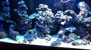 Rockscape Or Aquascaping On 240 Gallon Reef Aquarium - YouTube 75 Gallon Tank Aquascape Ideas Please Reef Central Online Community Minimalist Aquascaping Page 3 2reef Saltwater And How To A Aquarium Youtube Tank Rockscape To Drill Cement Your Live Rock Gmacreef Columns In A Saltwater Callorecom Pieter Van Suijlekoms Revisited Is There Science Live Rock Sanctuary The Why I Involuntarily Redid My Mr 7