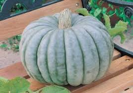 Types Of Pumpkins For Baking by Pumpkins Planting Growing And Harvesting Pumpkin Plants The