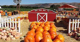 Uesugi Farms Pumpkin Patch by Spina Farms Pumpkin Patch In San Jose Ca Spina Farms