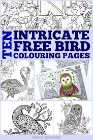 Bird Themed Colouring Pages