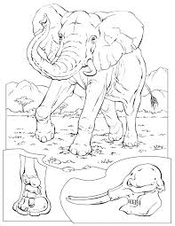 Colouring African Animals 53 Best Coloring Pages To Print Elephant Images On Pinterest