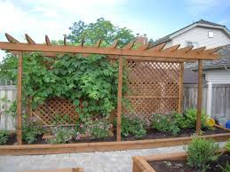 Backyard With Wooden Pergola And Grapes - Growing Grapes At Home ... Small Plot Intensive Gardening Tomahawk Permaculture Backyard Vineyard Winery Grapes In Your Own Backyard Lifestyle Bucks County Courier More About The Regent Winegrape Growing Your Grimms Gardens Trellis With In The Yard At Home How To Grow Grapes Steemit Seedless Stark Bros Grape Orchards Pinterest Orchards Seattle Wa Youtube Grown Grape Vine And Trellis Stock Photo Royalty First Years Goal