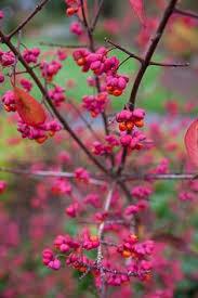 Top 10 Flowers That Bloom in Winter