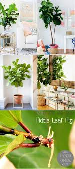 Top Growing Room Live Oak Design Ideas Fancy At Interior Trends