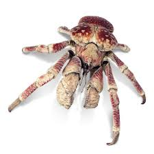 Do Hermit Crabs Shed Their Legs by Crab Facts For Kids How Do Crabs Move Dk Find Out
