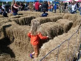 Sarasota Pumpkin Festival Location by Things To Do Near Hunsader Farms Annual Pumpkin Festival With Kids
