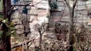 Brookfield Zoo Halloween Activities by Monkey House Brookfield Zoo Youtube