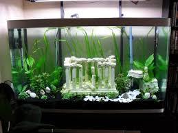 nouvel aquarium de 260 litres conseils aquariophilie org