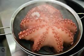 cuisiner poulpe frais comment attendrir cuisiner un poulpe à l italienne mangeons bien