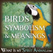 Bird Symbolism & Meaning | Spirit, Totem, & Power Animal Is This Bird Sick Learn The Signs Blue Jay Feather Meaning Diurnal Definition What Birds Are Why Backyard Getting Drunk On Fermented Berries A Cardinal Is A Presentative Of Loved One Who Has Passed When Are Dying In Central Michigan From Cadesold Ddt Pollution Skeletons Tit Wings And Wings Meet Brainiacs American Crow Audubon Hawk Symbolism Dreams Totem