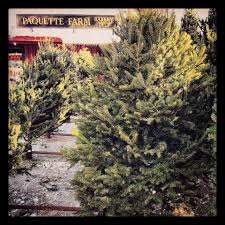 Christmas Tree Shop Shrewsbury Ma by Paquette Farm Home Facebook