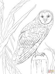 Owls Coloring Pages