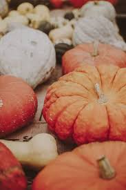 Shady Lane Farm Pumpkin Patch by 1250 Best I Love Pumpkins Images On Pinterest Autumn Pumpkin