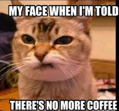 cat coffee no coffee cat dose of