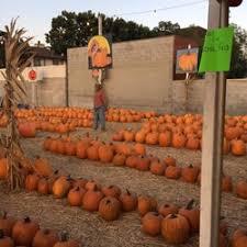 Pumpkin Patch Denver Pa by Mr Jone U0027s Pumpkin Patch 41 Photos U0026 15 Reviews Christmas Trees