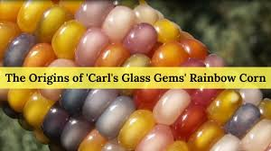 The Origins Of 'Carl's Glass Gems' Rainbow Corn - YouTube Patristics Scholar Michel R Barnes Weighs In On The Intra Carl Reiner Signs His Novel Archives Whale Oil Beef Hooked Whaleoil Media Rainbow Corn Oklahoma Farmer Breeds Tweets By Clbarnes06 Twitter Carl Barnes Clrbarnes25 This Lnatural Native Corn Is Bejeweled With Brilliantly C Lowry Md Invested L Nelson Frank Warren Reacts To Wins From Carl Frampton Paddy Barnes Te Belfast Northern Ireland 23 Aug 2015 Reilly Chairperson Keller Williams Lincoln