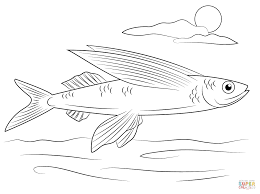 Click The Flying Fish Coloring Pages