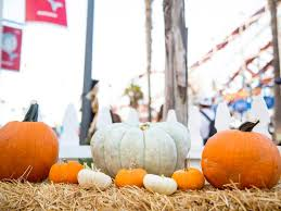 Bates Nut Farm Pumpkin Patch 2014 by Pumpkin Patches Throughout San Diego County