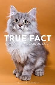 non shedding cats