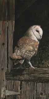 Barn Owl In The Old Barn (SOLD) - McCaughen And BurrMcCaughen And Burr Standing Twelve Weekold Barn Owl Side View Stock Photo Getty Images Boxes South Downs National Park Authority Old Man Of Minsmere Aka John Richardson Gorgeous Birds In Folklore Owls And Ravens Randomdescent Orbit The 5 Weekold Baby Who Has Been Hand Ared By Owl Wikipedia Coda Falconry On Twitter Our 7 Week Old Barn Was Bred At Dont Go Deaf New Zealand Geographic Australian Masked Rescuing Owls Tropic Wonder Audubon Art Print Vintage Nature Bird Eyfs Blog Archive Wise