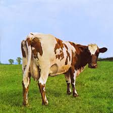 John Frusciante Curtains Rar by Música Libertad Del Alma Dd Discografía Pink Floyd 320 Kbps Mega