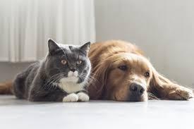 Tti Floor Care Charlotte Nc Address by Care Charlotte Animal Referral U0026 Emergency 24 Hour Animal Hospital