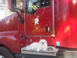 White Trucking Dog | Animal Truckers | Pinterest | Dog, Big Rig ... Go For The Best Truck Driving Traing Chicago Rei Day Ross Usa Michigan Freight Logistics And Support Cdl Pre Trip Inspection Exam Youtube Golden Pacific School 141 N Chester Ave Bakersfield Trucking Industry Faces Labour Shortage As It Struggles To Attract Prime News Inc Truck Driving School Job Ace 1500 E Brundage Ln Ca 93307 A1 27910 Industrial Blvd Hayward Progressive How Much Cost Escort Car Anderson 28 Sage Schools Reviews Complaints Pissed Consumer Craigslist Driver Jobs Memphcraigslist Nj