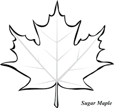 Toronto Maple Leaf Colouring Sheets Coloring Page Free Sugar At