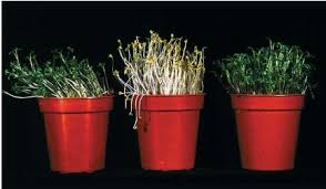 tropism body used water process life plants chemical