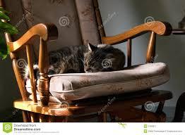 Sleeping Cat Stock Image. Image Of Warm, Afternoon, Sleep ...