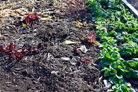 Fall Planting Guide for Your Kitchen Garden judyschickens