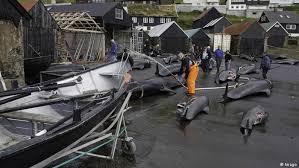 Nadine Yacht Sinking 1997 by 17901254 303 Jpg