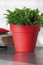 Best Plant For Windowless Bathroom by 76 Best Indoor Gardening Images On Pinterest Plants Indoor