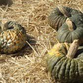 South San Jose Pumpkin Patch by Spina Farms Pumpkin Patch 365 Photos U0026 126 Reviews Pumpkin