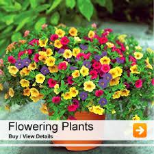 nurserylive buy 6000 nursery plants seeds bulbs pots