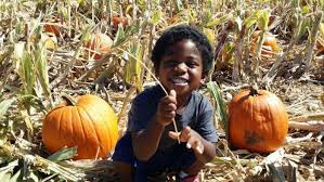 Pumpkin Patch Glendale Co by 11 Pumpkin Patches To Visit In Arizona