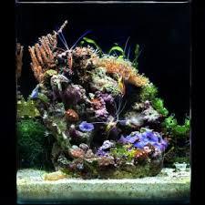aquarium nano eau de mer l aquarium d eau de mer de dennerle en tant que solution complète