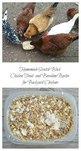 Homemade Scratch Block Chicken Treat And Boredom Buster For ... Diy Treat Basket Backyard Chickens Treating Bumblefoot In Chicken Coops Homemade Coops Backyard Chickens Page 1 Garden Delights Homemade Scratch Block And Boredom Buster For 175 Best Homestead Images On Pinterest Backyard Chickensthe Girls Get Treats Being Good Layers The Chick 20 Winter Busters Causes Prevention Treatment Treats Guide Dont Love Your Pets To Getting A Cold Treat Youtube Learn The Benefits Of Pumpkin Your Flock From Tillys