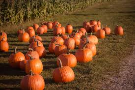 Spooner Farms Wa Pumpkin Patch by Your Guide To Pumpkin Patches In East Pierce County Adventure