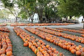 Great Pumpkin Patch Arthur Il by 9 Best Fall Day Trips In Illinois 2017