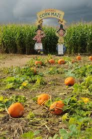 Pumpkin Picking Riverhead by Riverhead New York Smart Preservation