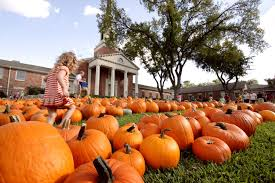 Pumpkin Patch Marble Falls by Where To Find Austin U0027s Best Pumpkin Patches