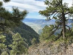 Christmas Tree Permits Durango Colorado by Tgsg Blog