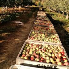 Best Pumpkin Apple Picking Long Island Ny by Where To Go Apple Picking Near Nyc