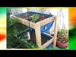 DIY Aquaponics For Beginners Barrel Fish Tank IBC Tank etc