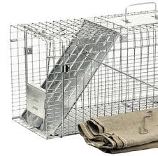 live cat trap how to trap feral cats cat trapping havahart us